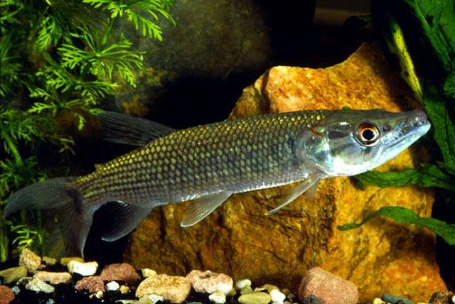 Welke roofvissen in aquarium?   Overige roofvissen Forum   Piranha Fury   Alles wat je wilt